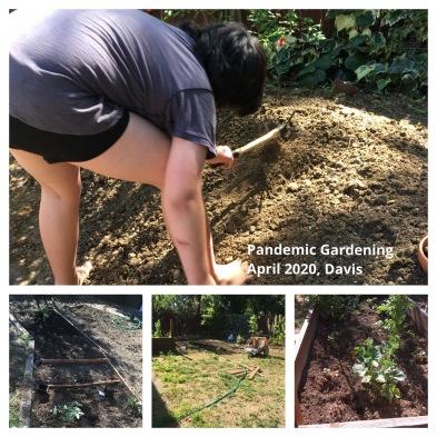 Pandemic_Gardening